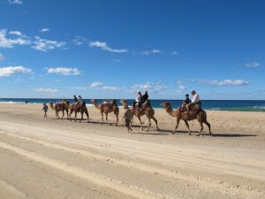 Camel Safaris Lighthouse Beach