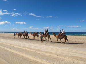 Camel Safaris Lighthouse Beach