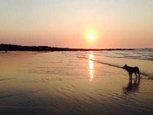 Sunset Gantheaume Point Elly